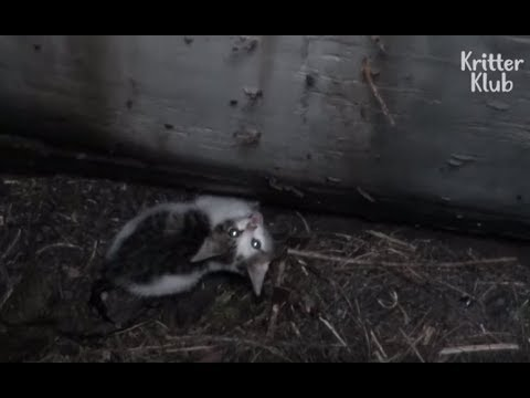 Cat Stuck Inside The Drain Hole | Animal in Crisis EP20