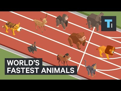 These are the world&39;s fastest animals