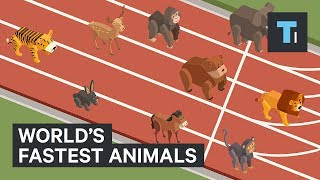 These are the worlds fastest animals