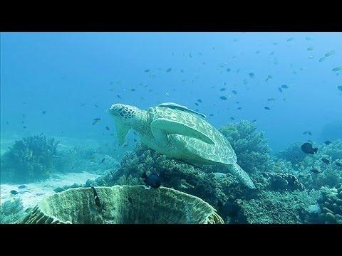 セブ島周辺の海 Coral Sea around Cebu Island,Philippines (Shot on Canon Powershot S120)