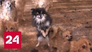 В Тюмени полицейские взломали собачий приют, чтобы спасти животных - Россия 24