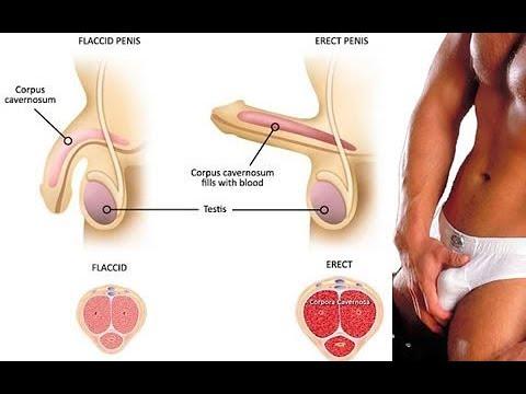Medicamentos para tener una ereccion fuerte
