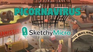 Picornavirus Overview Video - SketchyMicro USMLE Microbiology Review