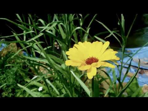 Dew Pond Creation - Part D