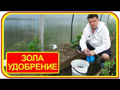 Зола как удобрение своими руками? Подкормка для томатов древесной золой.