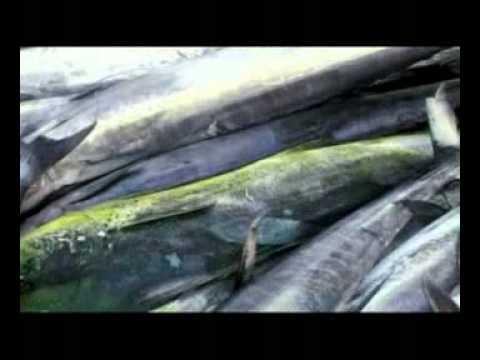 The Seychelles Islands - Fishing Video