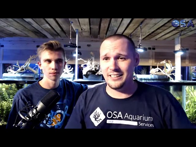 OSA Live ! Check out what NEW this week at the OSA  9/17/19