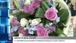 К 1 сентября в Красноярск привезли больше 56 тысяч цветов (Новости 01.09.16)