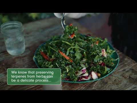 Flavor, Terpenes and The Vape Life with DAVINCI Vaporizers – #RaiseYourIQ