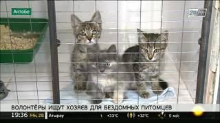 Бездомных животных в Актобе пристраивают в добрые руки