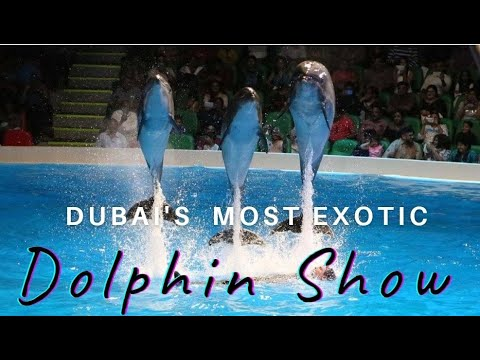DUBAI DOLPHIN SHOW | DUBAI DOLPHINARIUM | PLACES TO VISIT DUBAI |
