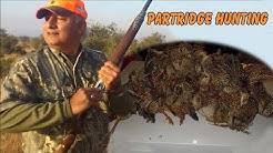 Grey Partridge Hunting In Pakistan