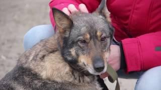 Хочу домой. Бездомные животные ищут хозяина. История собаки Даны.