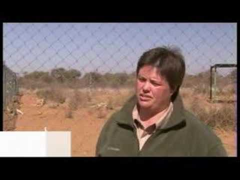 South Africa Cracks Down On 'canned' Hunting - July 16 07