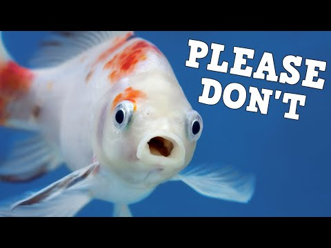 10 Things Fish Keepers Should NEVER DO