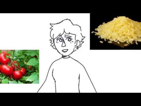 GMO bio project