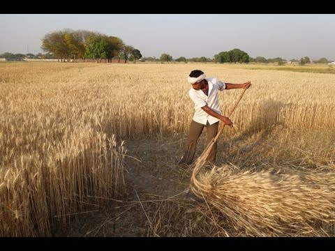 Scythe Project in India 2016