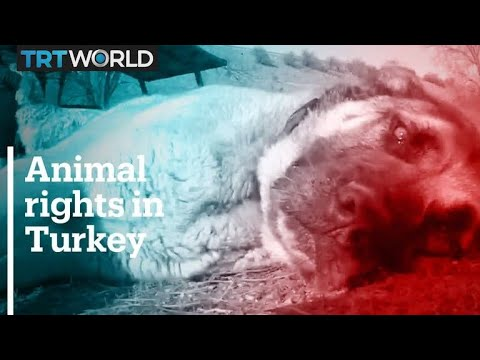 Turkey introduces new laws to protect animals