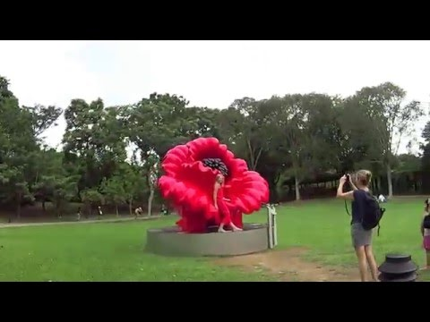 Singapore Botanic Gardens Virtual Walk