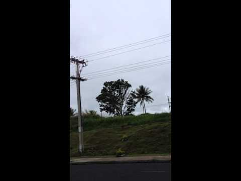 Fiji electric fire - kinoya