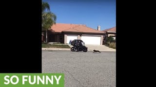 Dude uses motorcycle to exercise his dog