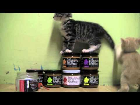 KITTENS and SALSA