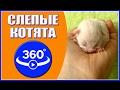 Слепые котята. Видео 360 градусов.