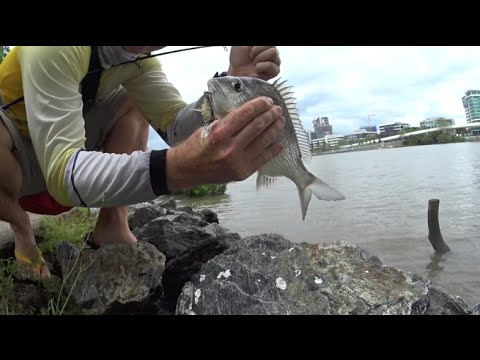 How To Catch High-tide Bream On Lures In The Brisbane River