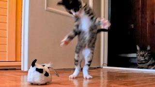 kitten versus robotic dog adult cat