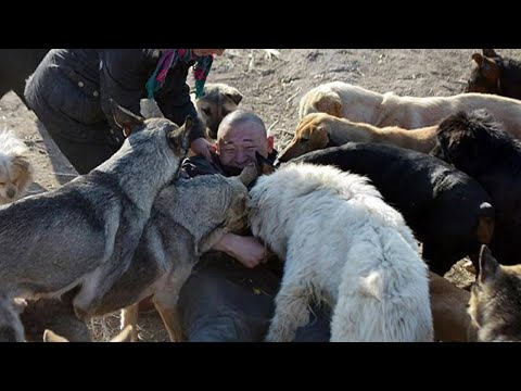 видео: Миллионер искал любимую собаку на бойне... и потерял все деньги.