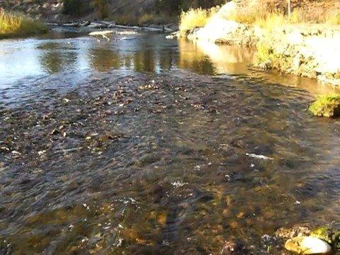 Nine Mile Creek -  Missoula County, Montana