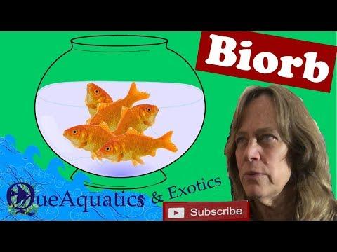 Biorb Aquarium Set Up - Fishless Cycle