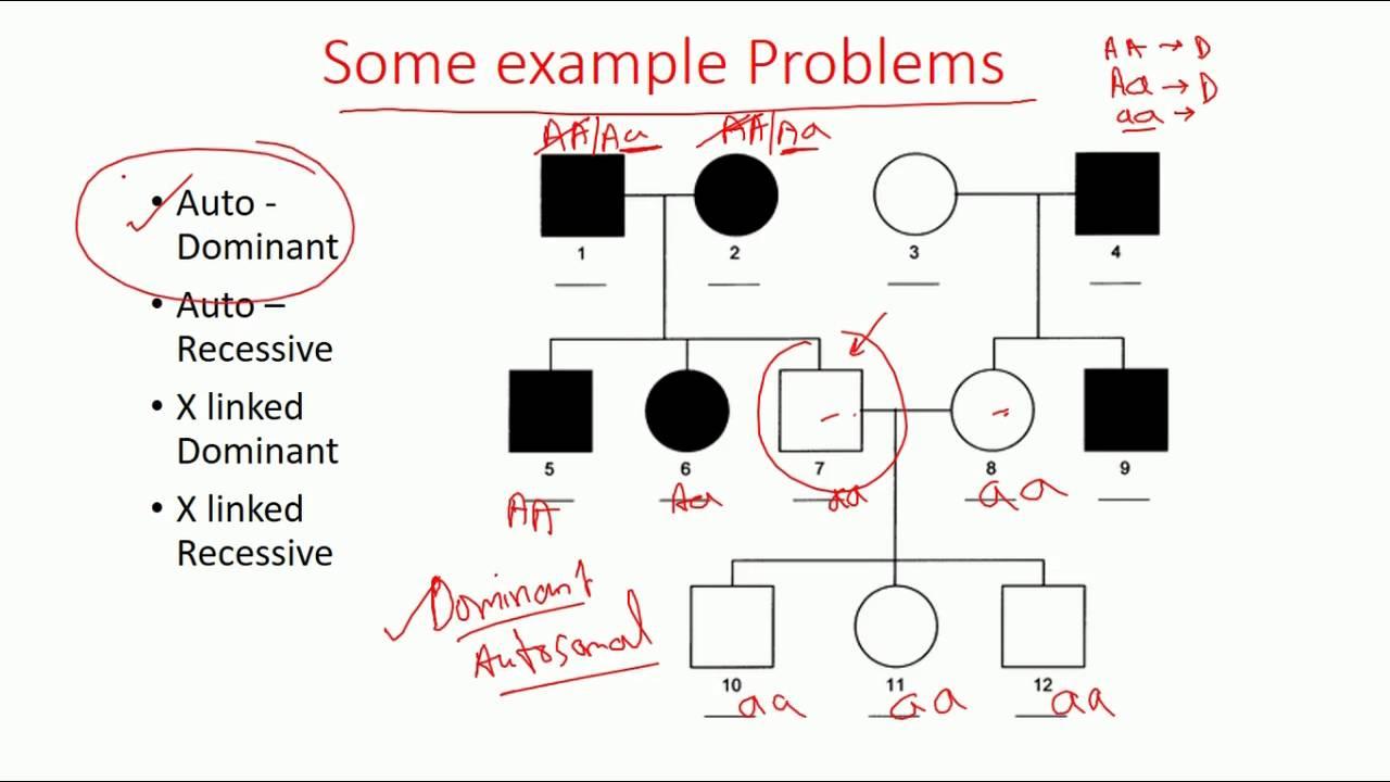 pedigree analysis methods dominant recessive and x linked pedigree [ 1280 x 720 Pixel ]