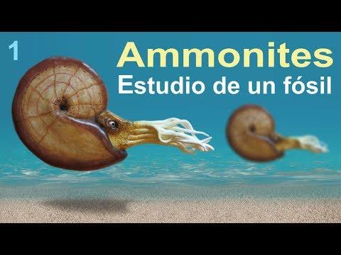 Ammonites, una historia del Cretácico (divulgación científica)