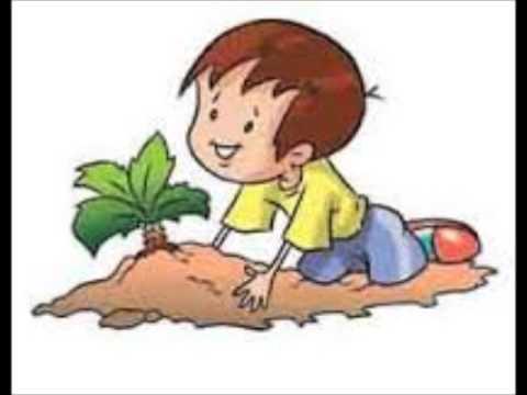 مراحل نمو النبات Youtube