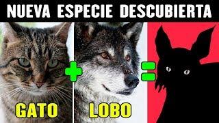 GATO + LOBO! NUEVA ESPECIE ANIMAL DESCUBIERTA!