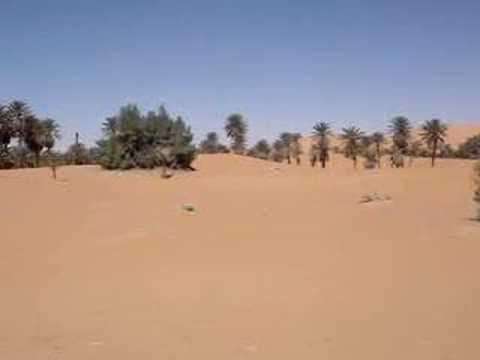 La fauna autóctona del desierto del Sahara!!