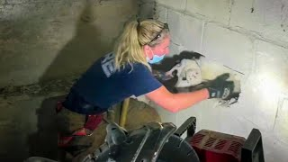 Missing Dog Rescued From Inside Concrete Wall After 5 Days