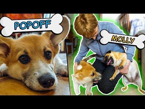 POPOFF incontra la MOLLY e la GNOGNA