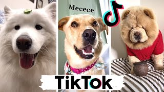TIK TOKS That Make You Go AAWWW  ~ Funny Dogs of TikTok Compilation ~ Cutest Puppies!