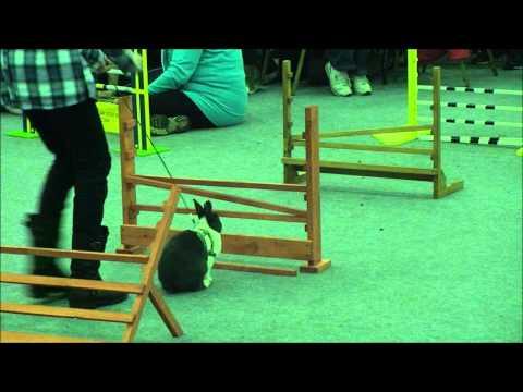 Rabbit Grand National The Final