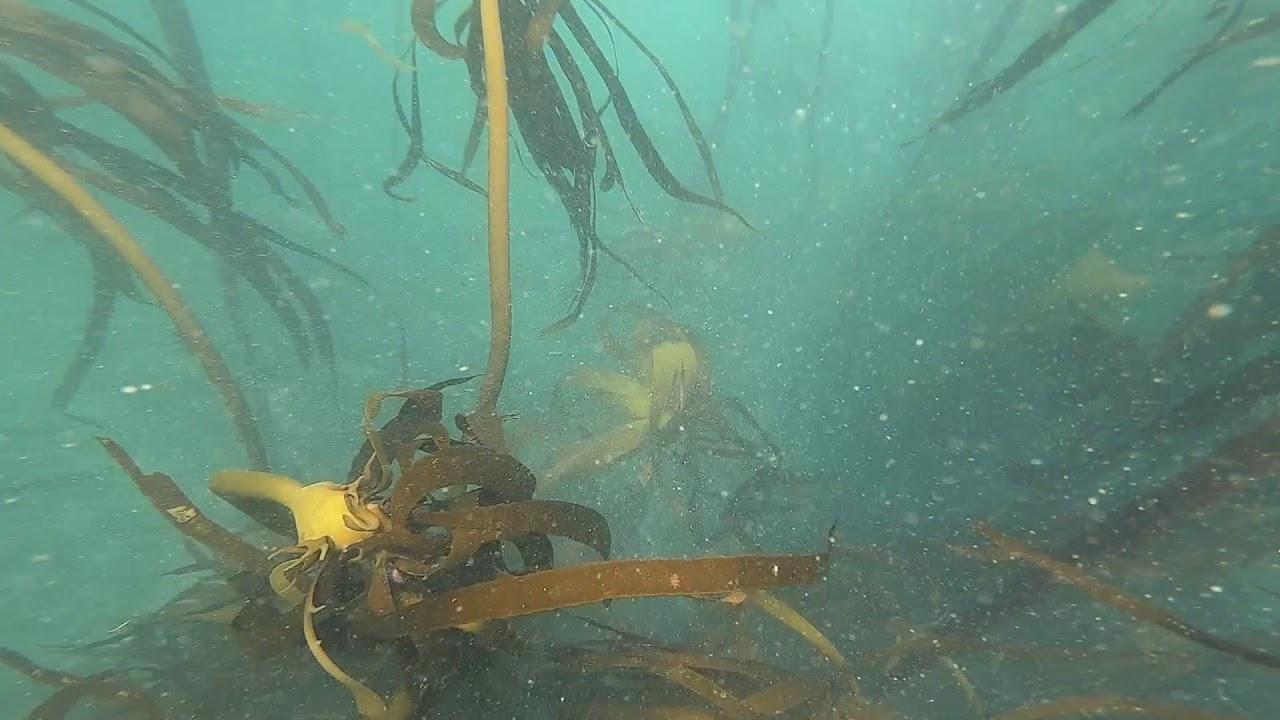 Spearfishing Hermanus 1080 quality