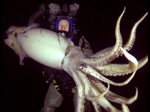 Mexique : pêche aux calamars géants !