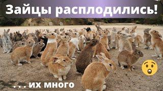 Кролики сильно расплодились несмотря на карантин. Крольчата в каждом углу.