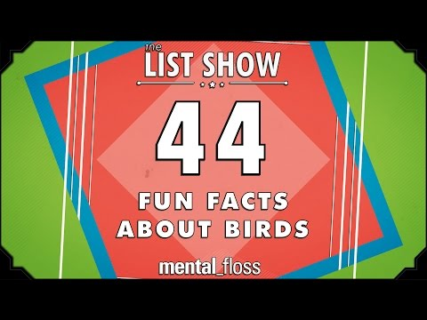 44 Fun Facts about Birds  - mental_floss List Show Ep. 440
