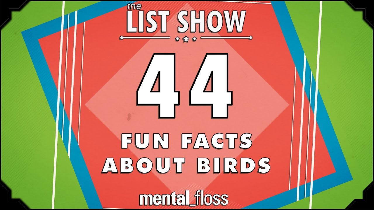 44 Fun Facts About Birds   Mental_floss List Show Ep. 440   YouTube