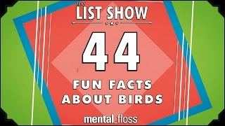 44 Fun Facts about Birds  - mental_floss List...
