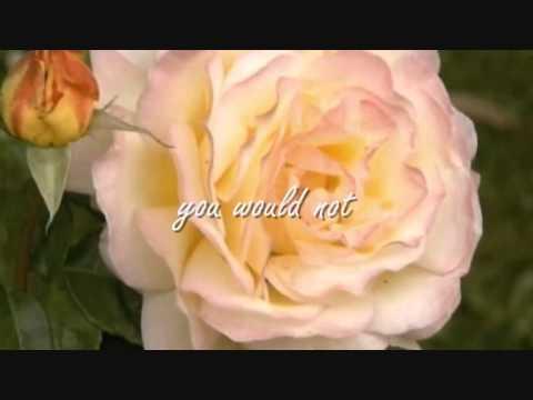The Secret Life of Plants Stevie Wonder (lyrics)