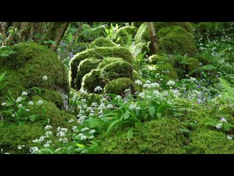 Nature Sounds & Relaxing Classical Music-Sound of Birds Singing-Johnnie Lawson-Relaxation