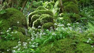 Nature Sounds Relaxing Classical Music-Sound of Birds Singing-Johnnie Lawson-Relaxation